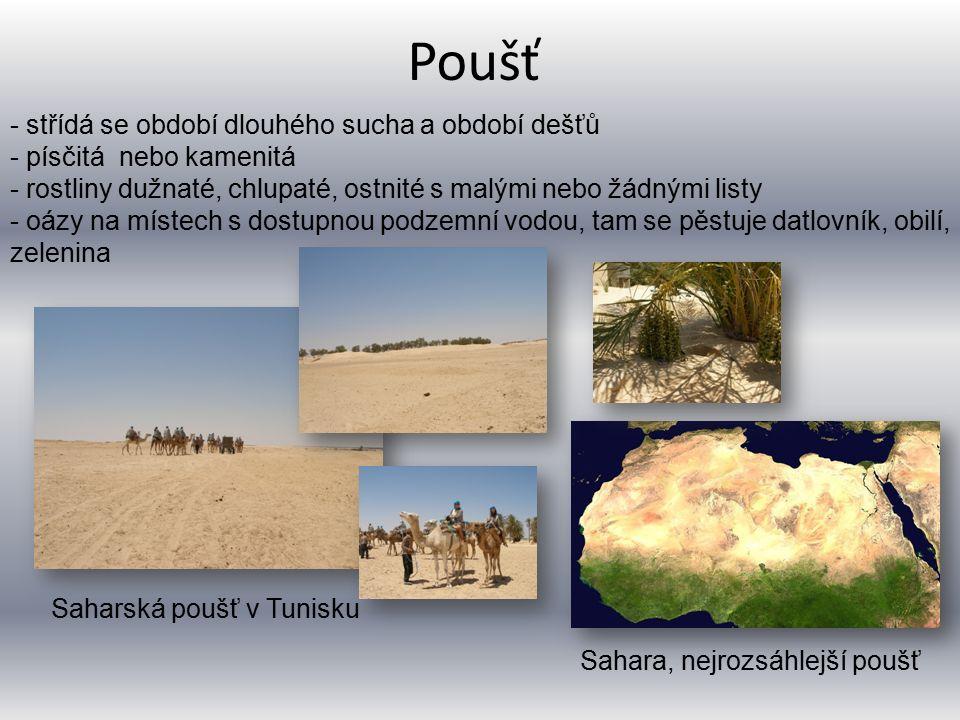 Poušť Saharská poušť v Tunisku - střídá se období dlouhého sucha a období dešťů - písčitá nebo kamenitá - rostliny dužnaté, chlupaté, ostnité s malými nebo žádnými listy - oázy na místech s dostupnou podzemní vodou, tam se pěstuje datlovník, obilí, zelenina Sahara, nejrozsáhlejší poušť