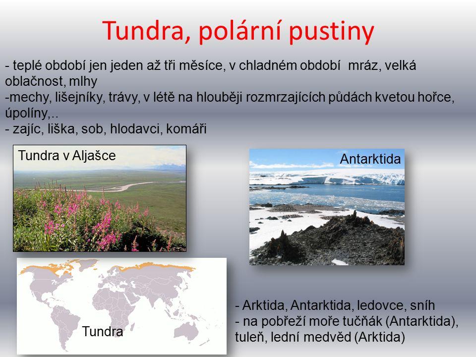 Tundra, polární pustiny Tundra Tundra v Aljašce Antarktida - teplé období jen jeden až tři měsíce, v chladném období mráz, velká oblačnost, mlhy -mechy, lišejníky, trávy, v létě na hlouběji rozmrzajících půdách kvetou hořce, úpolíny,..