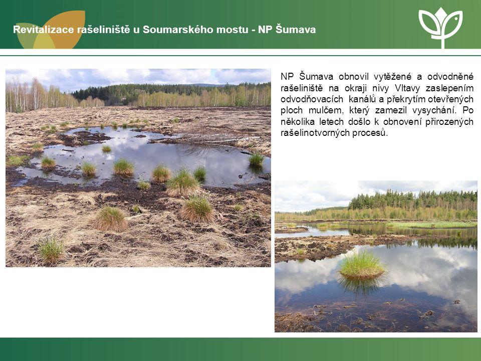 Revitalizace rašeliniště u Soumarského mostu NP Šumava – po realizaci