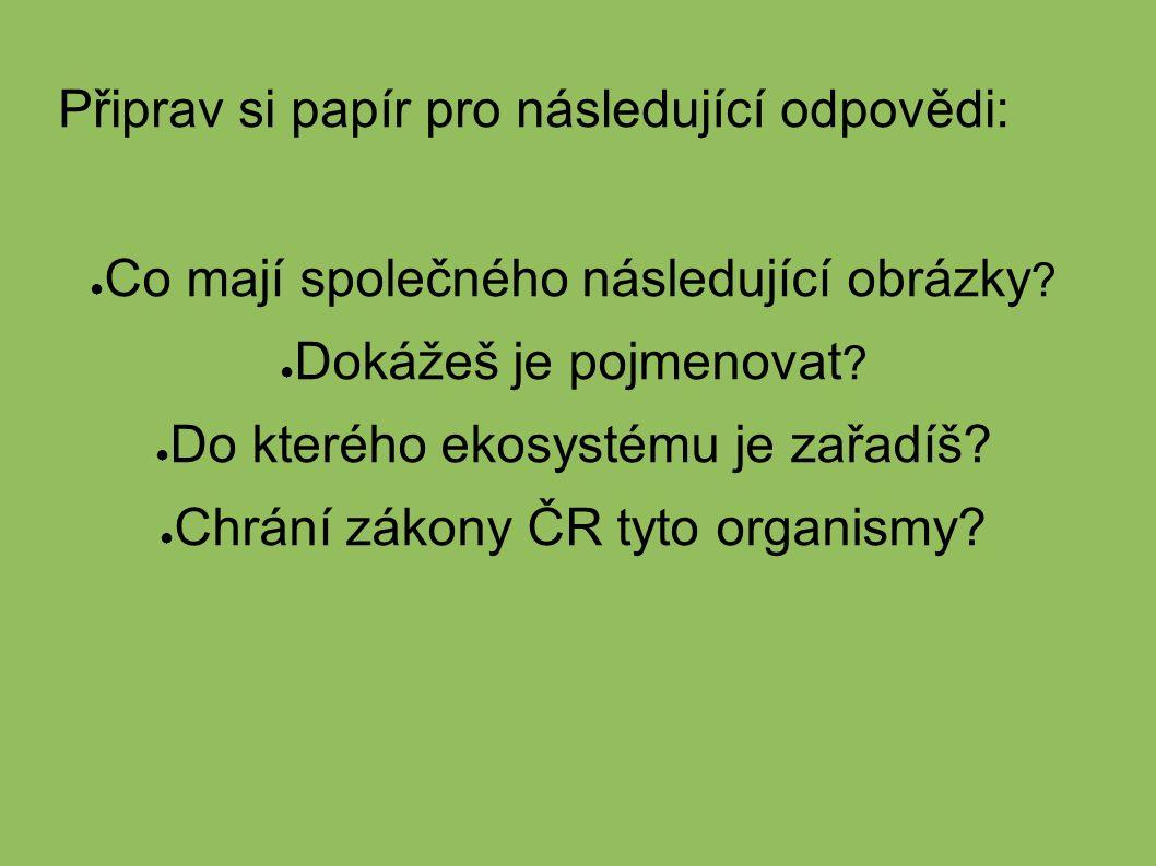 Připrav si papír pro následující odpovědi: ● Co mají společného následující obrázky .
