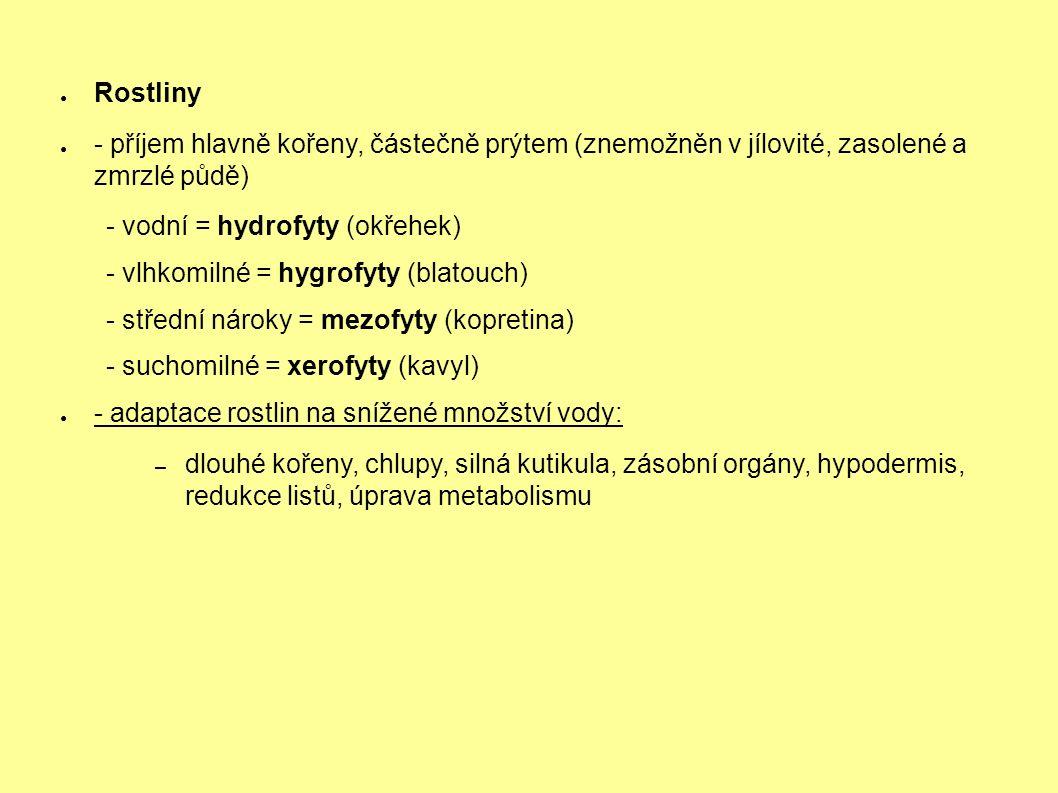 ● Rostliny ● - příjem hlavně kořeny, částečně prýtem (znemožněn v jílovité, zasolené a zmrzlé půdě) - vodní = hydrofyty (okřehek) - vlhkomilné = hygrofyty (blatouch) - střední nároky = mezofyty (kopretina) - suchomilné = xerofyty (kavyl) ● - adaptace rostlin na snížené množství vody: – dlouhé kořeny, chlupy, silná kutikula, zásobní orgány, hypodermis, redukce listů, úprava metabolismu