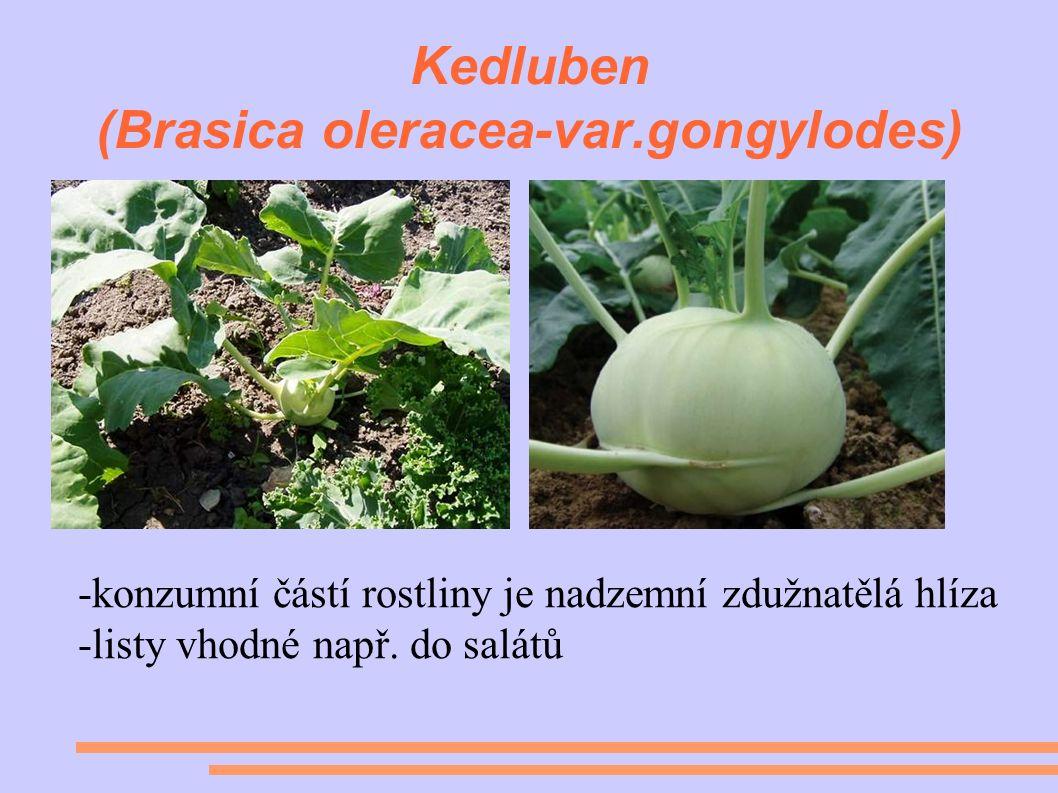 Kedluben (Brasica oleracea-var.gongylodes) -konzumní částí rostliny je nadzemní zdužnatělá hlíza -listy vhodné např.