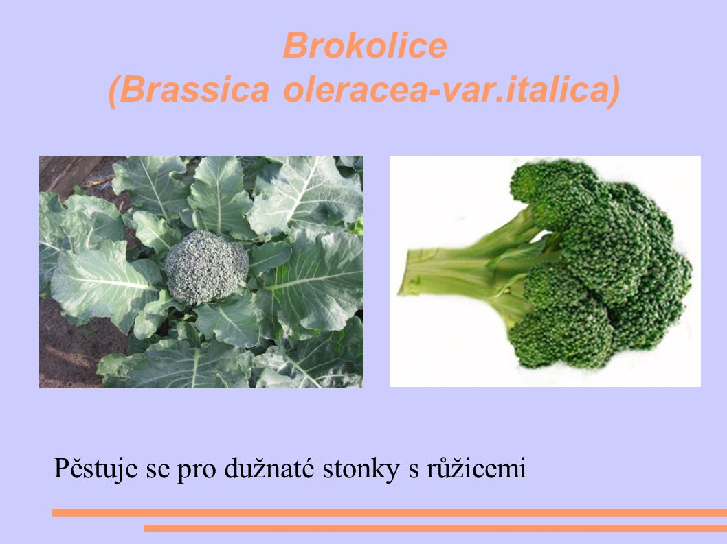 Brokolice (Brassica oleracea-var.italica) Pěstuje se pro dužnaté stonky s růžicemi