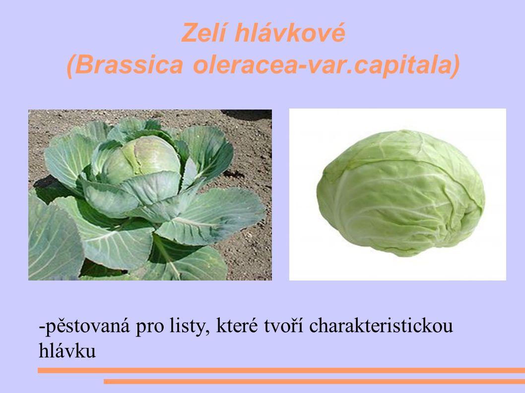 Zelí hlávkové (Brassica oleracea-var.capitala) -pěstovaná pro listy, které tvoří charakteristickou hlávku