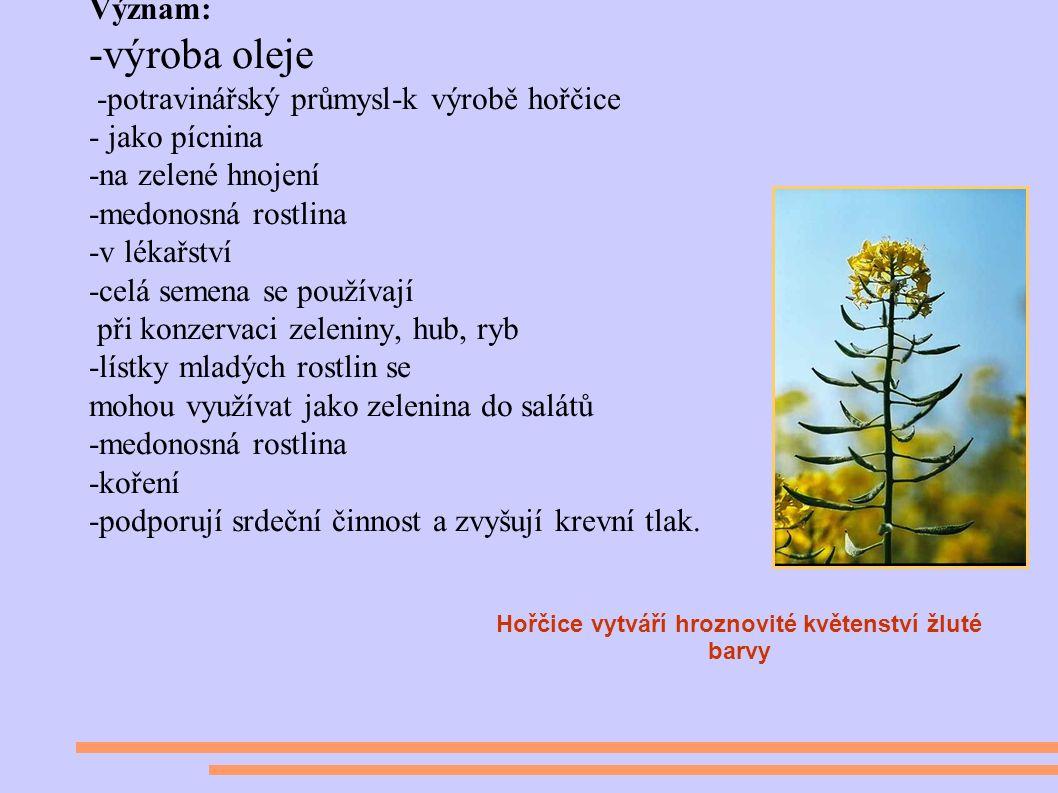 Význam: -výroba oleje -potravinářský průmysl-k výrobě hořčice - jako pícnina -na zelené hnojení -medonosná rostlina -v lékařství -celá semena se používají při konzervaci zeleniny, hub, ryb -lístky mladých rostlin se mohou využívat jako zelenina do salátů -medonosná rostlina -koření -podporují srdeční činnost a zvyšují krevní tlak.