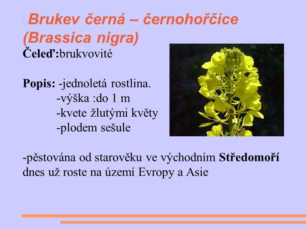 Brukev černá – černohořčice (Brassica nigra) Čeleď:brukvovité Popis: -jednoletá rostlina.