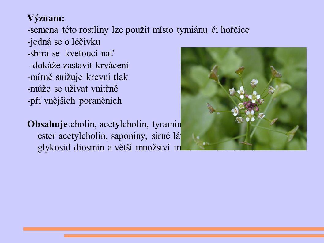 Význam: -semena této rostliny lze použít místo tymiánu či hořčice -jedná se o léčivku -sbírá se kvetoucí nať -dokáže zastavit krvácení -mírně snižuje krevní tlak -může se užívat vnitřně -při vnějších poraněních Obsahuje:cholin, acetylcholin, tyramin, histamin, dusík, betain a jeho ester acetylcholin, saponiny, sirné látky, třísloviny, flavonový glykosid diosmin a větší množství minerálního vzduchu