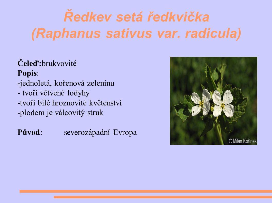 Ředkev setá ředkvička (Raphanus sativus var.