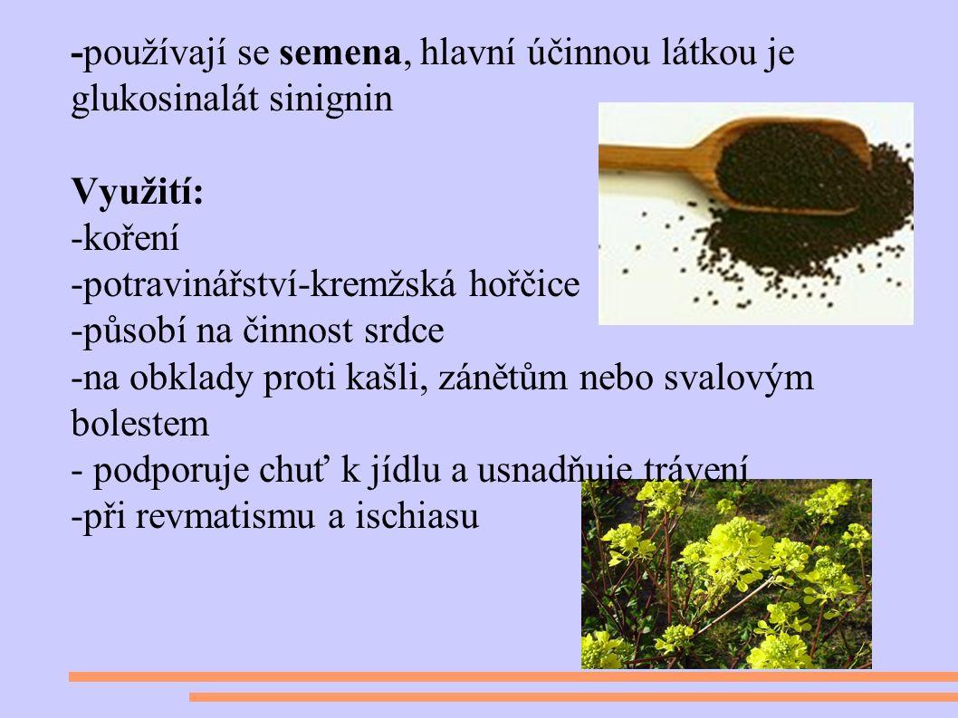 -používají se semena, hlavní účinnou látkou je glukosinalát sinignin Využití: -koření -potravinářství-kremžská hořčice -působí na činnost srdce -na obklady proti kašli, zánětům nebo svalovým bolestem - podporuje chuť k jídlu a usnadňuje trávení -při revmatismu a ischiasu