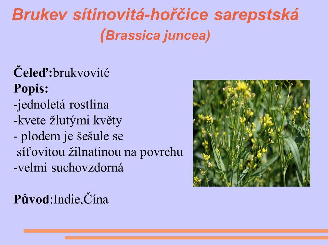 Brukev sítinovitá-hořčice sarepstská ( Brassica juncea) Čeleď:brukvovité Popis: -jednoletá rostlina -kvete žlutými květy - plodem je šešule se síťovitou žilnatinou na povrchu -velmi suchovzdorná Původ:Indie,Čína