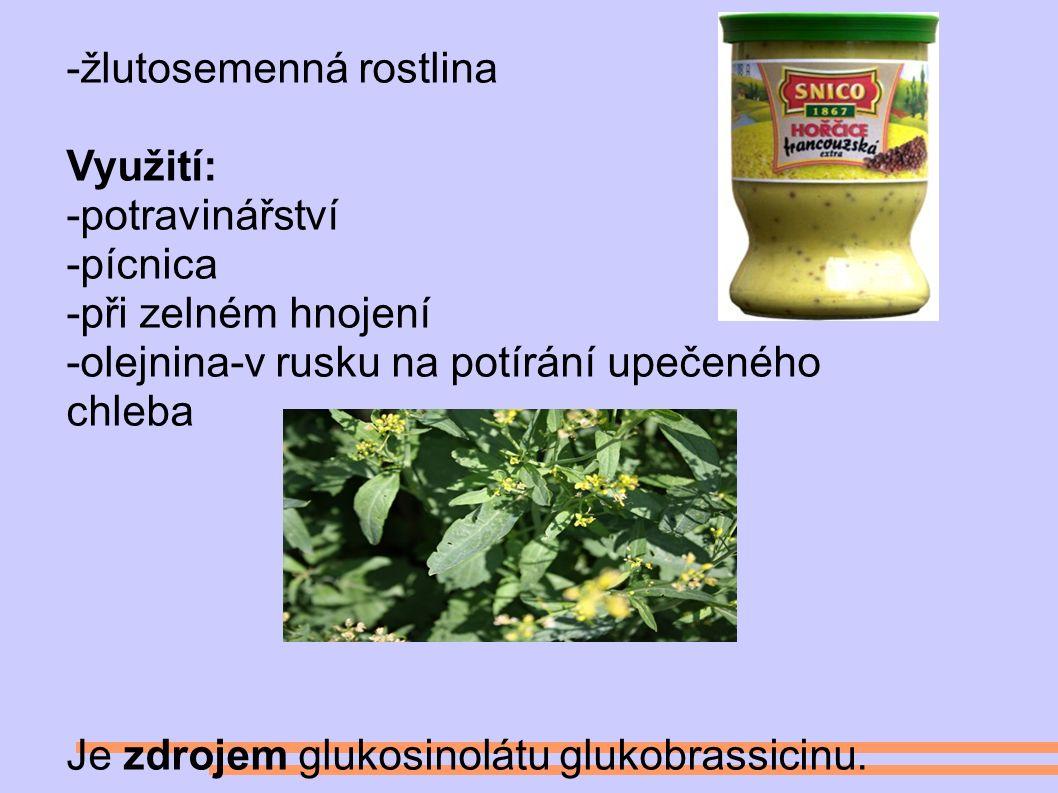 -žlutosemenná rostlina Využití: -potravinářství -pícnica -při zelném hnojení -olejnina-v rusku na potírání upečeného chleba Je zdrojem glukosinolátu glukobrassicinu.