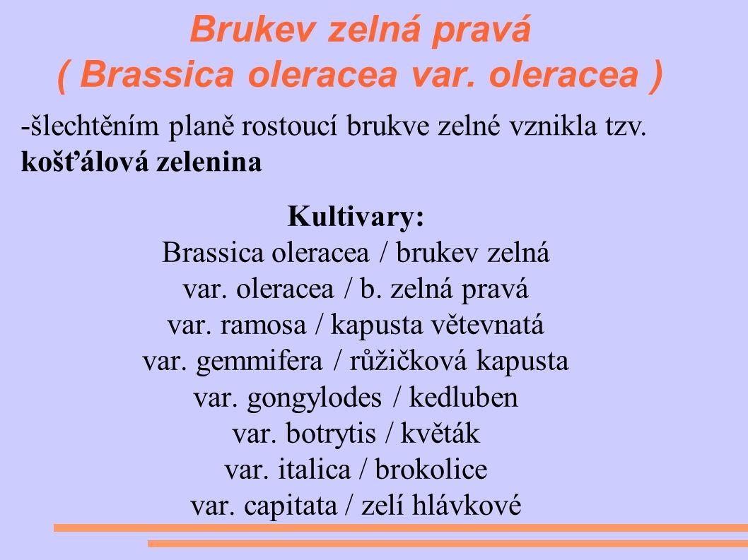 Brukev zelná pravá ( Brassica oleracea var.