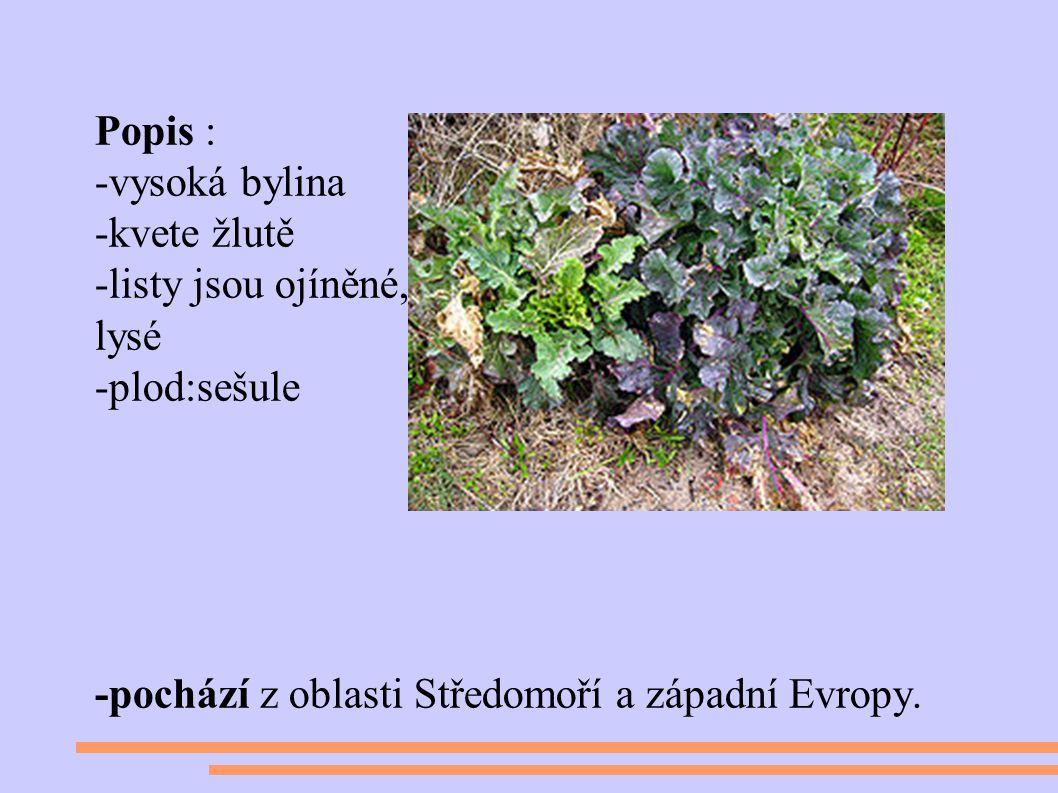 Čeleď:brukvovité Popis : -vysoká bylina -kvete žlutě -listy jsou ojíněné, lysé -plod:sešule -pochází z oblasti Středomoří a západní Evropy.