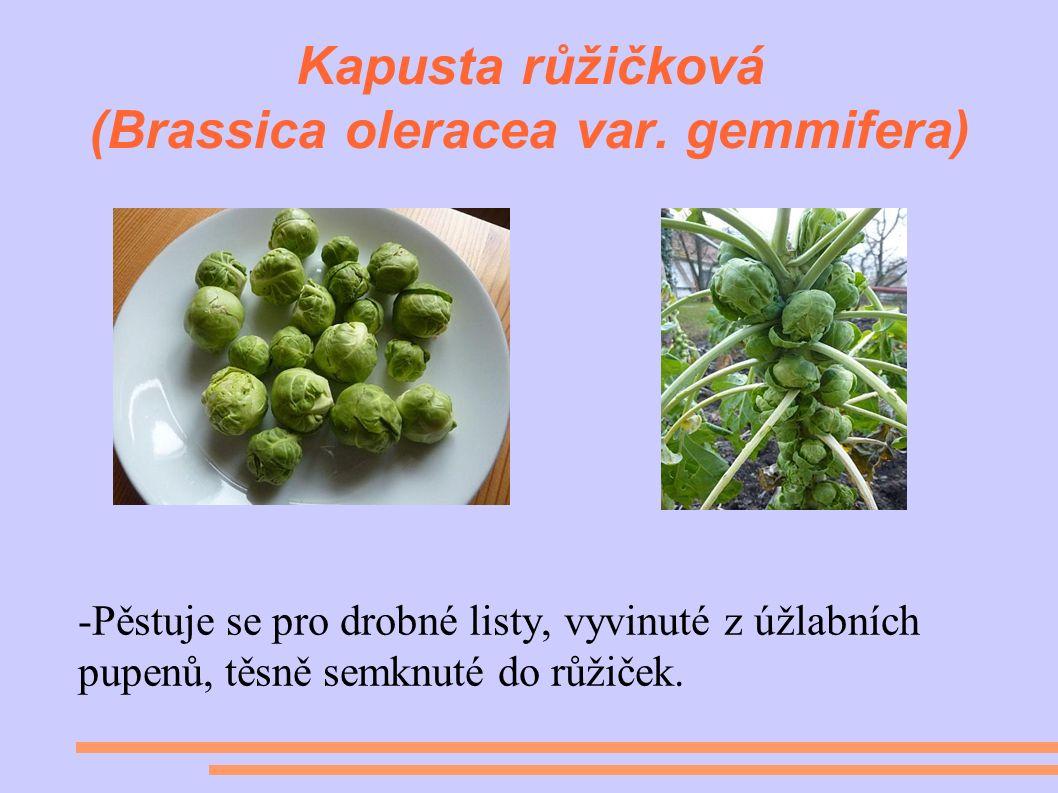 Kapusta růžičková (Brassica oleracea var.