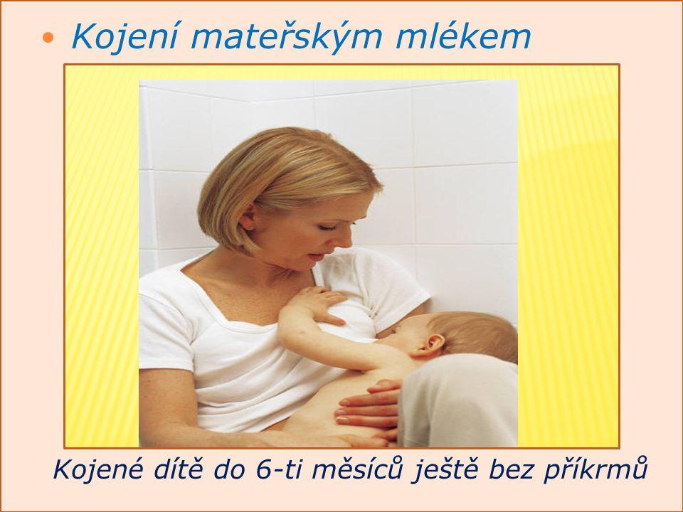 Kojení mateřským mlékem Kojené dítě do 6-ti měsíců ještě bez příkrmů