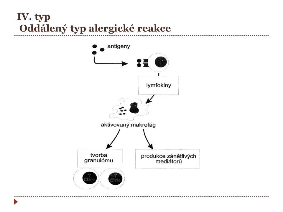 IV. typ Oddálený typ alergické reakce