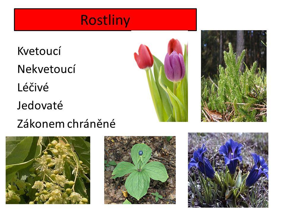 Rostliny Kvetoucí Nekvetoucí Léčivé Jedovaté Zákonem chráněné