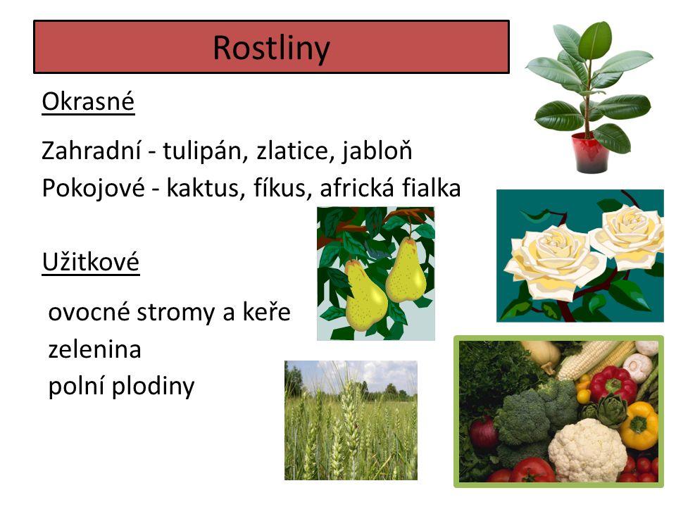 Rostliny Okrasné Zahradní - tulipán, zlatice, jabloň Pokojové - kaktus, fíkus, africká fialka Užitkové ovocné stromy a keře zelenina polní plodiny