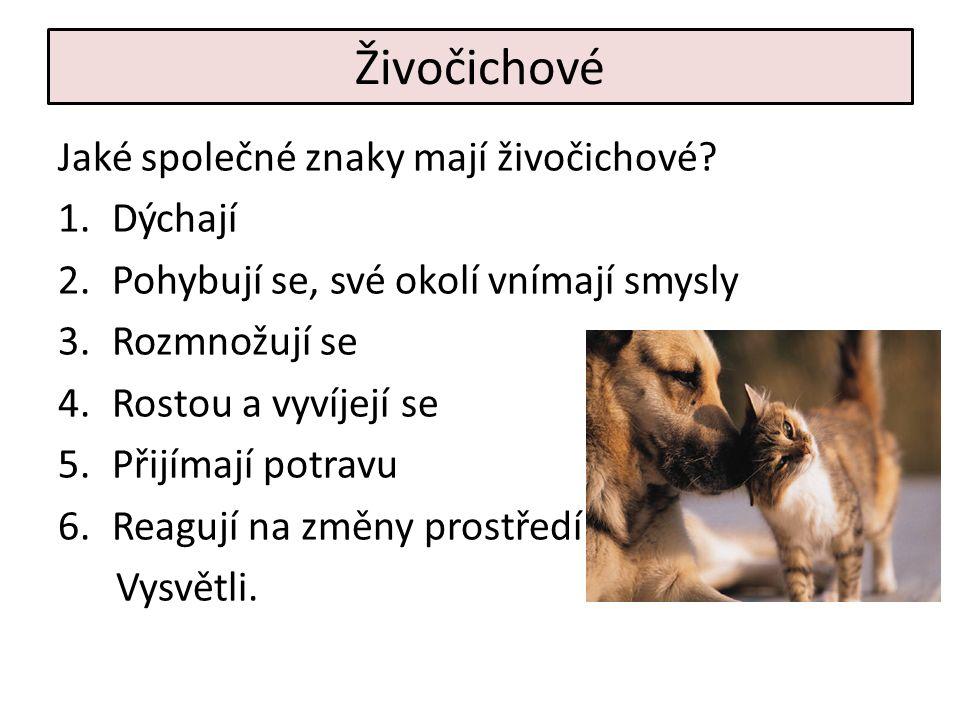Živočichové Jaké společné znaky mají živočichové.