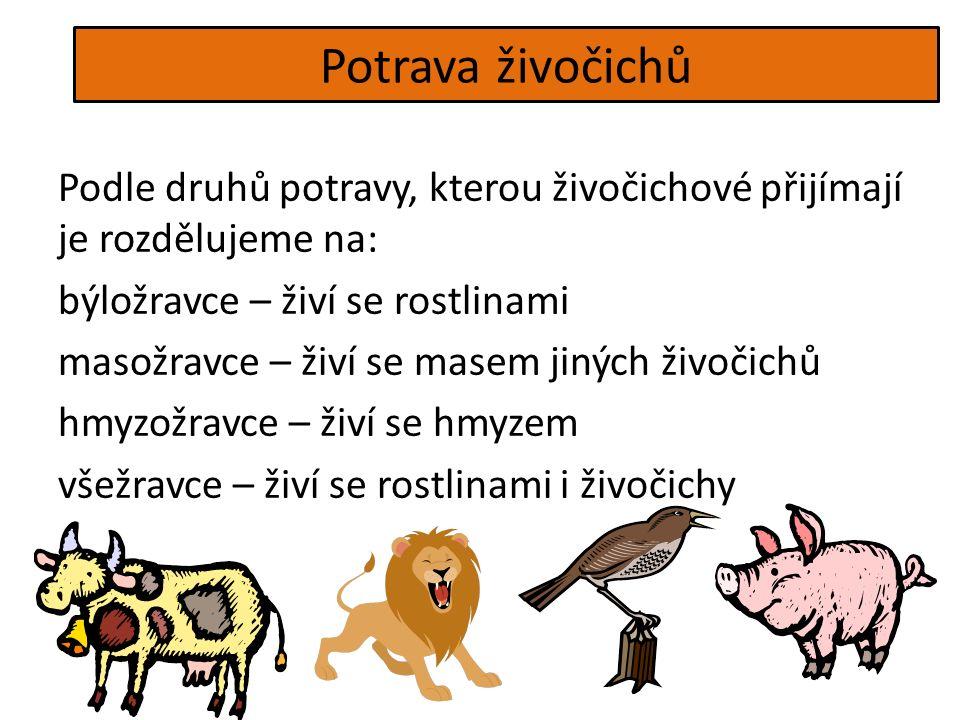Potrava živočichů Podle druhů potravy, kterou živočichové přijímají je rozdělujeme na: býložravce – živí se rostlinami masožravce – živí se masem jiných živočichů hmyzožravce – živí se hmyzem všežravce – živí se rostlinami i živočichy