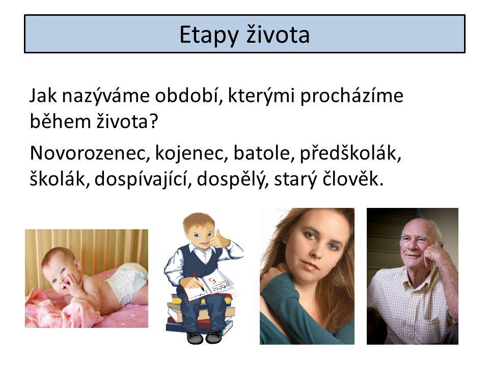 Etapy života Jak nazýváme období, kterými procházíme během života.