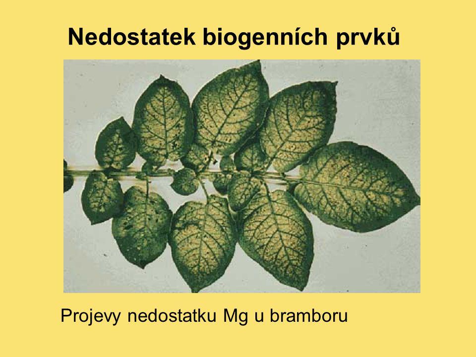 Nedostatek biogenních prvků Projevy nedostatku Mg u bramboru