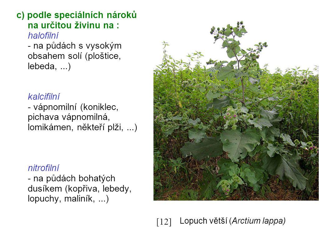 c) podle speciálních nároků na určitou živinu na : halofilní - na půdách s vysokým obsahem solí (ploštice, lebeda,...) kalcifilní - vápnomilní (koniklec, pichava vápnomilná, lomikámen, někteří plži,...) nitrofilní - na půdách bohatých dusíkem (kopřiva, lebedy, lopuchy, maliník,...) [11] [12] Lopuch větší (Arctium lappa))