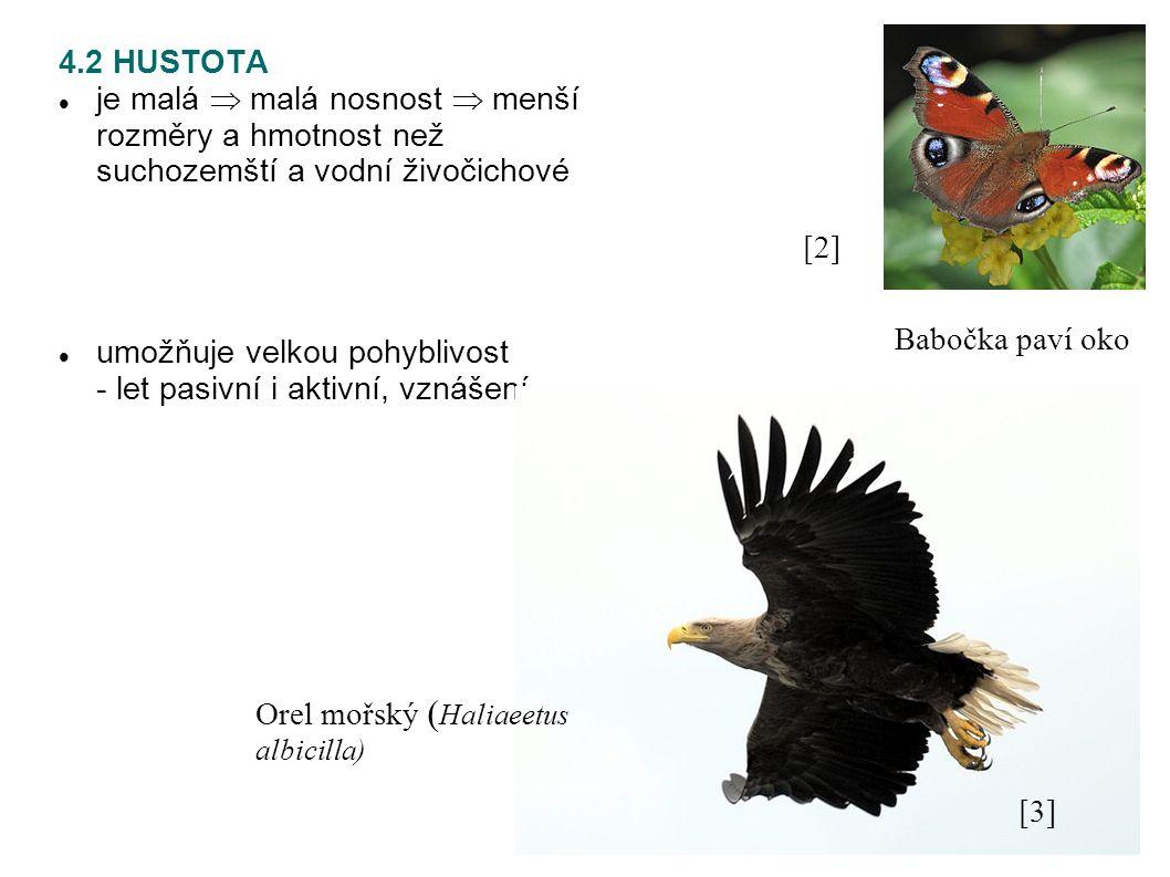4.2 HUSTOTA je malá  malá nosnost  menší rozměry a hmotnost než suchozemští a vodní živočichové umožňuje velkou pohyblivost - let pasivní i aktivní, vznášení [2][2] Babočka paví oko [3][3] Orel mořský ( Haliaeetus albicilla)