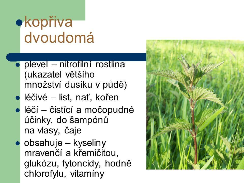 kopřiva dvoudomá plevel – nitrofilní rostlina (ukazatel většího množství dusíku v půdě) léčivé – list, nať, kořen léčí – čistící a močopudné účinky, do šampónů na vlasy, čaje obsahuje – kyseliny mravenčí a křemičitou, glukózu, fytoncidy, hodně chlorofylu, vitamíny