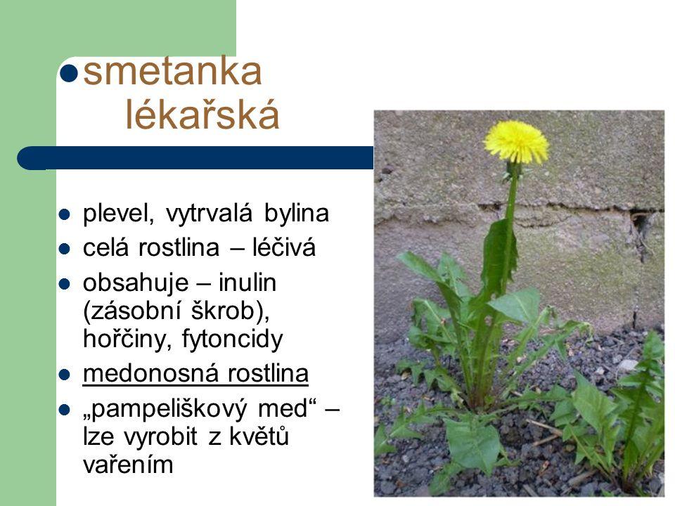 """smetanka lékařská plevel, vytrvalá bylina celá rostlina – léčivá obsahuje – inulin (zásobní škrob), hořčiny, fytoncidy medonosná rostlina """"pampeliškový med – lze vyrobit z květů vařením"""