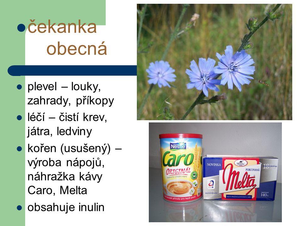 čekanka obecná plevel – louky, zahrady, příkopy léčí – čistí krev, játra, ledviny kořen (usušený) – výroba nápojů, náhražka kávy Caro, Melta obsahuje inulin