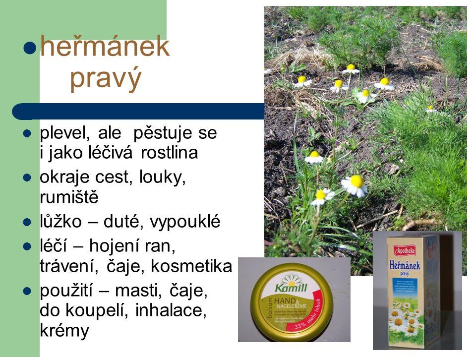 heřmánek pravý plevel, ale pěstuje se i jako léčivá rostlina okraje cest, louky, rumiště lůžko – duté, vypouklé léčí – hojení ran, trávení, čaje, kosmetika použití – masti, čaje, do koupelí, inhalace, krémy