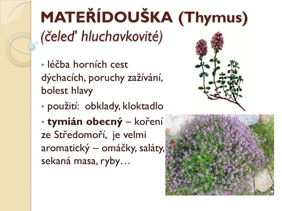 MATEŘÍDOUŠKA (Thymus) (čeleď hluchavkovité) léčba horních cest dýchacích, poruchy zažívání, bolest hlavy použití: obklady, kloktadlo tymián obecný – koření ze Středomoří, je velmi aromatický – omáčky, saláty, sekaná masa, ryby…