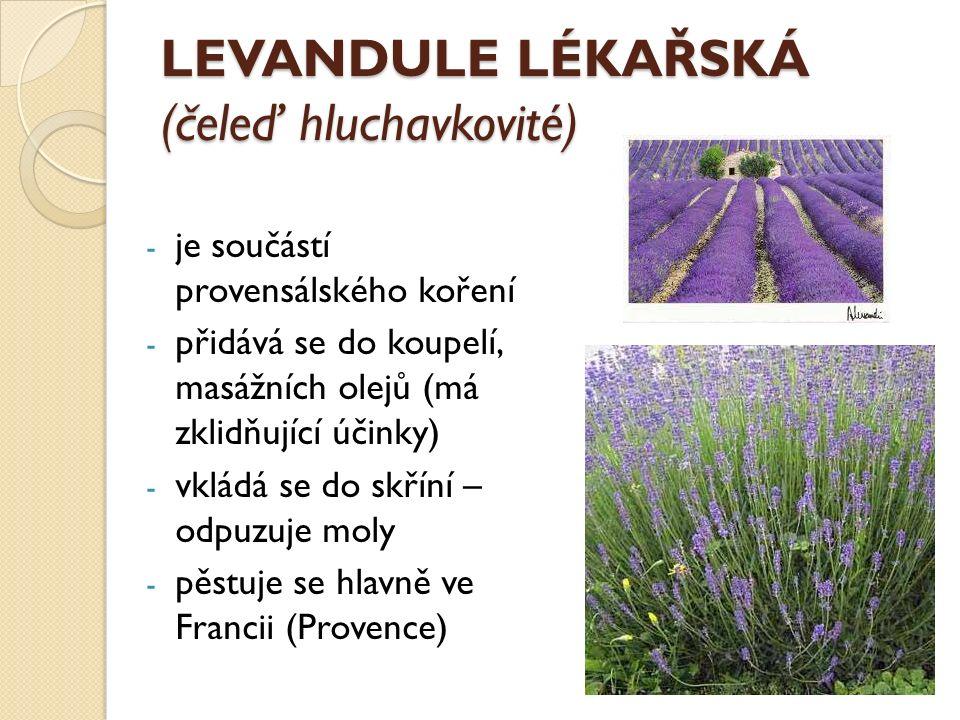 LEVANDULE LÉKAŘSKÁ (čeleď hluchavkovité) - je součástí provensálského koření - přidává se do koupelí, masážních olejů (má zklidňující účinky) - vkládá se do skříní – odpuzuje moly - pěstuje se hlavně ve Francii (Provence)