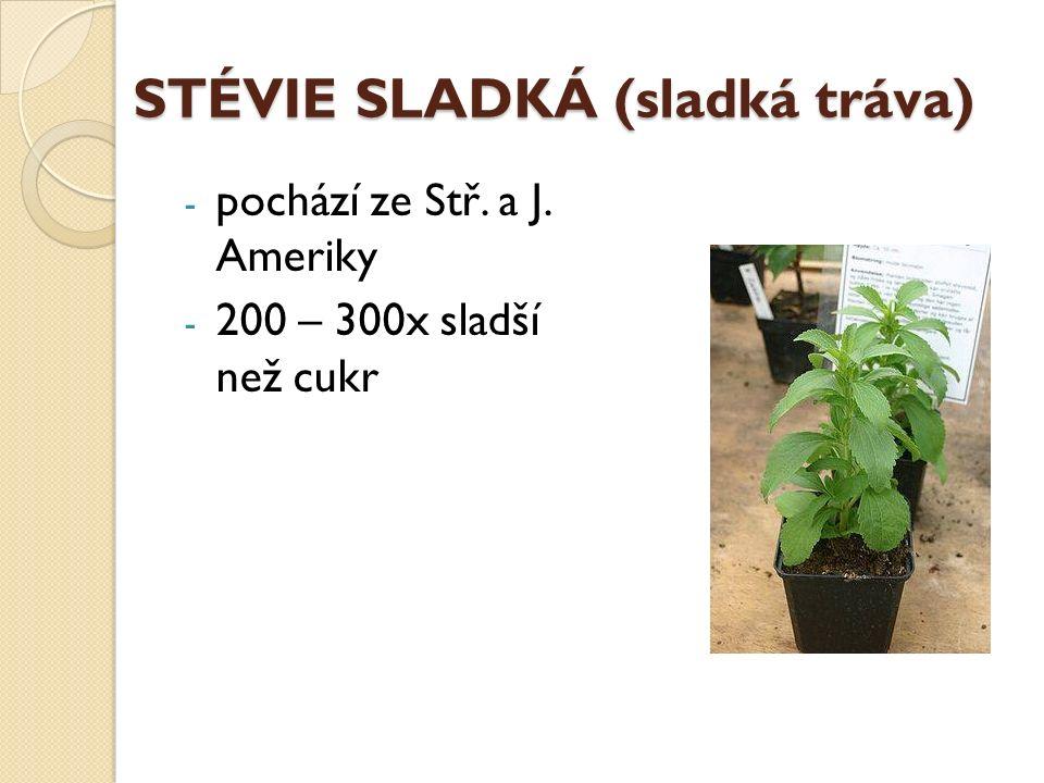 STÉVIE SLADKÁ (sladká tráva) - pochází ze Stř. a J. Ameriky - 200 – 300x sladší než cukr