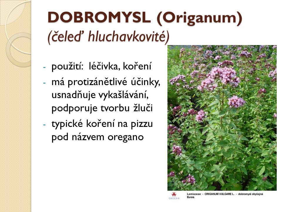 DOBROMYSL (Origanum) (čeleď hluchavkovité) - použití: léčivka, koření - má protizánětlivé účinky, usnadňuje vykašlávání, podporuje tvorbu žluči - typi