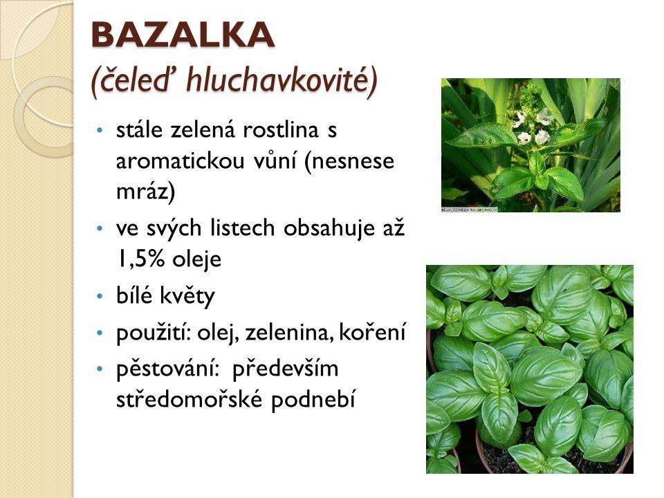BAZALKA (čeleď hluchavkovité) stále zelená rostlina s aromatickou vůní (nesnese mráz) ve svých listech obsahuje až 1,5% oleje bílé květy použití: olej