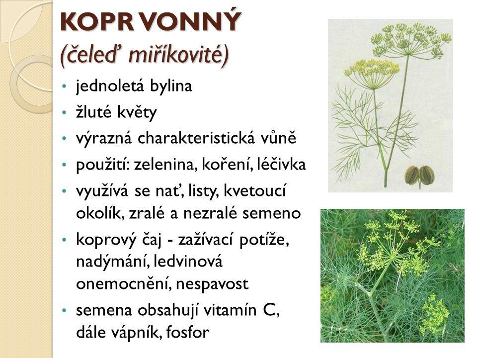 KOPR VONNÝ (čeleď miříkovité) jednoletá bylina žluté květy výrazná charakteristická vůně použití: zelenina, koření, léčivka využívá se nať, listy, kve