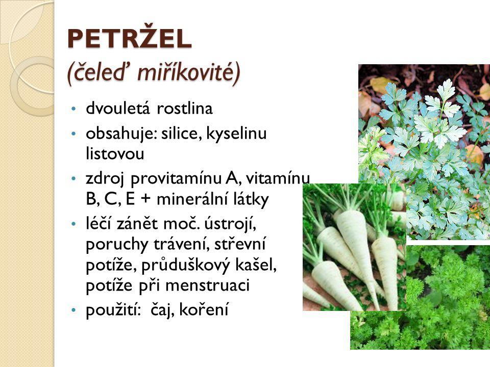 PETRŽEL (čeleď miříkovité) dvouletá rostlina obsahuje: silice, kyselinu listovou zdroj provitamínu A, vitamínu B, C, E + minerální látky léčí zánět moč.