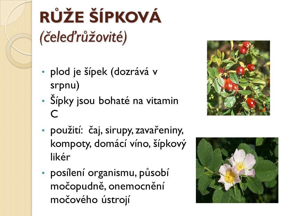 RŮŽE ŠÍPKOVÁ (čeleďrůžovité) plod je šípek (dozrává v srpnu) Šípky jsou bohaté na vitamin C použití: čaj, sirupy, zavařeniny, kompoty, domácí víno, ší