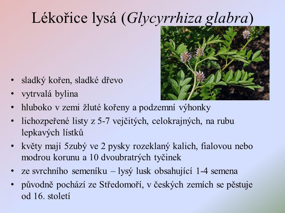 Lékořice lysá (Glycyrrhiza glabra) sladký kořen, sladké dřevo vytrvalá bylina hluboko v zemi žluté kořeny a podzemní výhonky lichozpeřené listy z 5-7 vejčitých, celokrajných, na rubu lepkavých lístků květy mají 5zubý ve 2 pysky rozeklaný kalich, fialovou nebo modrou korunu a 10 dvoubratrých tyčinek ze svrchního semeníku – lysý lusk obsahující 1-4 semena původně pochází ze Středomoří, v českých zemích se pěstuje od 16.