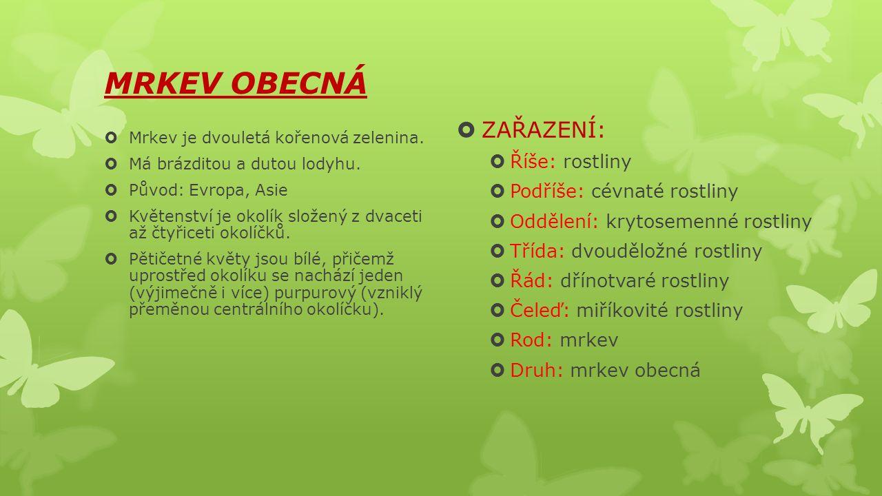 MRKEV OBECNÁ  Mrkev je dvouletá kořenová zelenina.