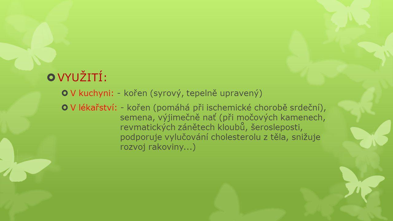  VYUŽITÍ:  V kuchyni: - kořen (syrový, tepelně upravený)  V lékařství: - kořen (pomáhá při ischemické chorobě srdeční), semena, výjimečně nať (při močových kamenech, revmatických zánětech kloubů, šerosleposti, podporuje vylučování cholesterolu z těla, snižuje rozvoj rakoviny...)