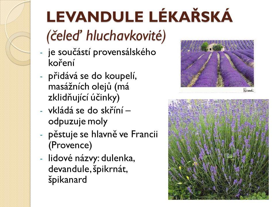 LEVANDULE LÉKAŘSKÁ (čeleď hluchavkovité) - je součástí provensálského koření - přidává se do koupelí, masážních olejů (má zklidňující účinky) - vkládá se do skříní – odpuzuje moly - pěstuje se hlavně ve Francii (Provence) - lidové názvy: dulenka, devandule, špikrnát, špikanard