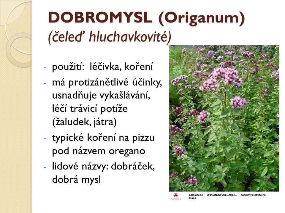 DOBROMYSL (Origanum) (čeleď hluchavkovité) - použití: léčivka, koření - má protizánětlivé účinky, usnadňuje vykašlávání, léčí trávicí potíže (žaludek, játra) - typické koření na pizzu pod názvem oregano - lidové názvy: dobráček, dobrá mysl