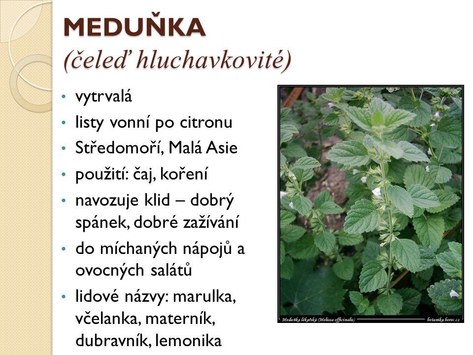 BAZALKA (čeleď hluchavkovité) stále zelená rostlina s aromatickou vůní (nesnese mráz) ve svých listech obsahuje až 1,5% oleje bílé květy použití: olej, zelenina, koření pěstování: především středomořské podnebí