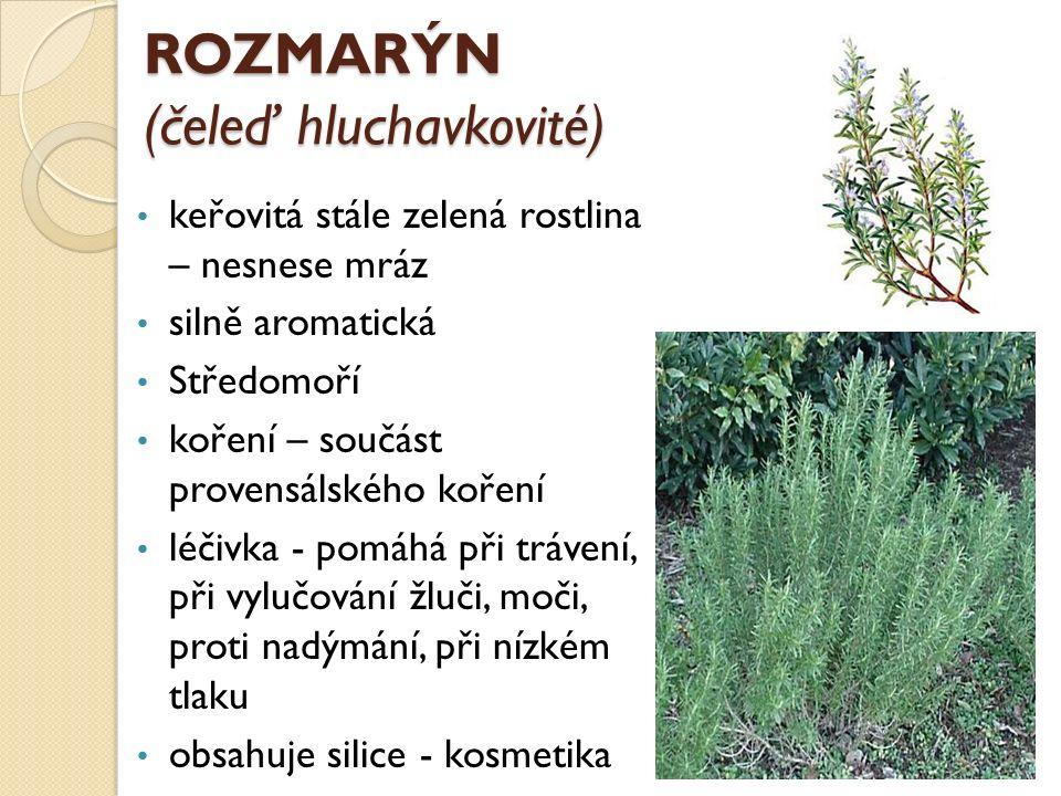 ROZMARÝN (čeleď hluchavkovité) keřovitá stále zelená rostlina – nesnese mráz silně aromatická Středomoří koření – součást provensálského koření léčivka - pomáhá při trávení, při vylučování žluči, moči, proti nadýmání, při nízkém tlaku obsahuje silice - kosmetika