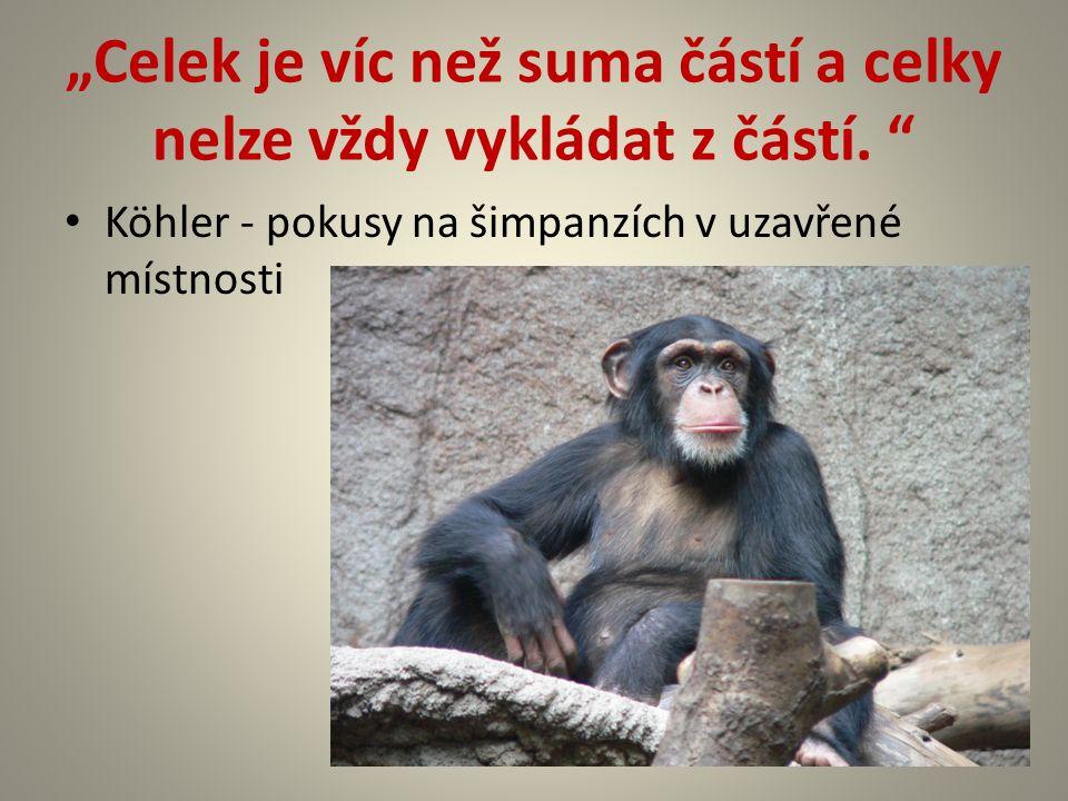 """""""Celek je víc než suma částí a celky nelze vždy vykládat z částí. """" Köhler - pokusy na šimpanzích v uzavřené místnosti"""