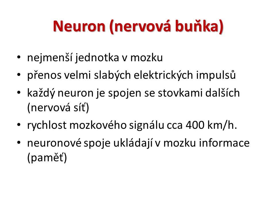 Neuron (nervová buňka) nejmenší jednotka v mozku přenos velmi slabých elektrických impulsů každý neuron je spojen se stovkami dalších (nervová síť) rychlost mozkového signálu cca 400 km/h.