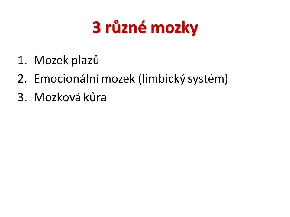 3 různé mozky 1.Mozek plazů 2.Emocionální mozek (limbický systém) 3.Mozková kůra